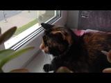 Кошка ловит голубей