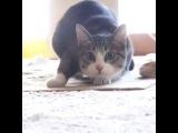 котята зажигает