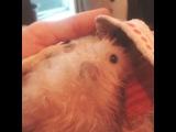 Гоша принял банные процедуры:)